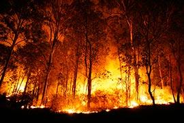 Equipamentos de combate a incêndio florestal